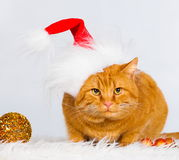 Animals. Ginger cat white isolated, Christmas hat, tree toys! Royalty Free Stock Images