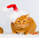 Animals. Ginger cat white isolated, Christmas hat, tree toys!. Wonderful ginger cat, has yellow eyes, dressed in red Christmas hat, playing in tree toys balls Stock Photo