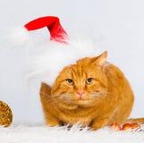 Animals. Ginger cat white isolated, Christmas hat, tree toys! Stock Photo