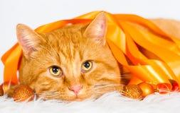Animals. Ginger cat white , orange ribbon! Stock Image