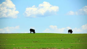 Animals grazing on grassland, mongolia Stock Image
