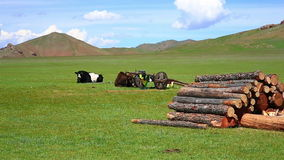 Animals grazing on grassland, mongolia Royalty Free Stock Photos