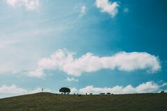 Animals grazing on hillside stock photo