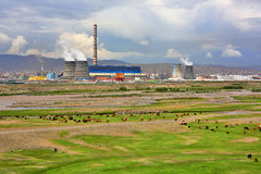 Animals grazing next to power plant Stock Images