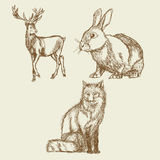 Animals hand drawing collection vintage Royalty Free Stock Image
