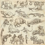 Animals - An hand drawn, full sized, illustrations on paper. Stock Image