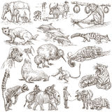 Animals - An hand drawn, full sized, illustrations on white. Royalty Free Stock Photos