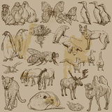 Animals - Hand drawn vector pack Stock Image