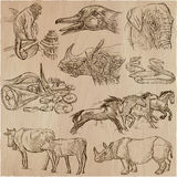 Animals - an hand drawn vector pack, collection. Stock Images