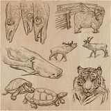 Animals - an hand drawn vector pack, collection. Animals around the World. An hand drawn vector illustrations. Collection. Editable in layers and groups Royalty Free Stock Image