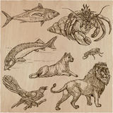 Animals - An hand drawn vector pack, line art. Animals around the World.Collection of an hand drawn vector illustrations. Freehand sketches. Line art. Each Stock Photos