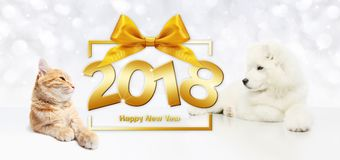 Animals happy new year concept, cat and dog with gift box frame Royalty Free Stock Photos