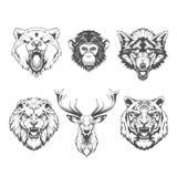 Animals heads. Line art royalty free illustration