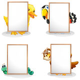 Animals hiding at the back of the whiteboards Royalty Free Stock Images