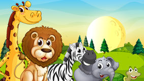 Animals at the hilltop with pine trees Stock Images
