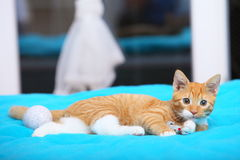 Animals at home - red cute little cat pet kitty on bed Royalty Free Stock Image