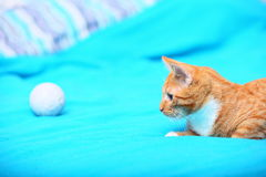 Animals at home - red cute little cat pet kitty on bed Royalty Free Stock Photography