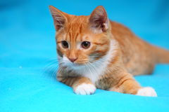 Animals at home - red cute little cat pet kitty on bed Stock Photos