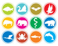 Animals icons buttons Stock Image