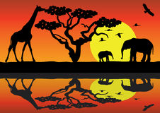 Animals In Africa Royalty Free Stock Photo