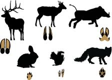 Animals and its tracks isolated on white Royalty Free Stock Photography