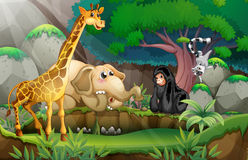 Animals in jungle Royalty Free Stock Photo