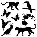 Animals jungle silhouette vector set. Animals illustration vector jungle tropical silhouette set isolated on white Royalty Free Stock Image