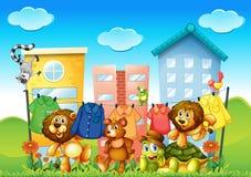 Animals and laundry Royalty Free Stock Photos