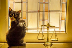 Animals law and justice Stock Image