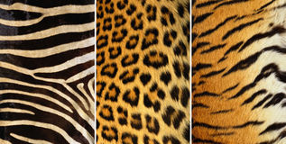 Animals leather texture Stock Photo