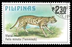 Animals, Leopard Cat. Philippines - stamp printed in1979, Series Fauna, Animals, Leopard Cat Royalty Free Stock Images