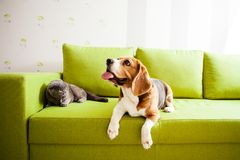 The animals lying. The cat and the dog are lying on the green sofa in the room Stock Images