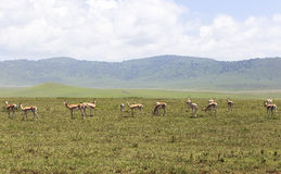 Animals in Maasai Mara, Kenya Stock Photography