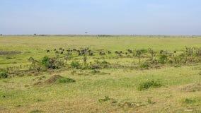 Animals in Masai Mara National Park. Stock Photos