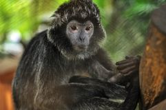 Monkey type animals stock photo