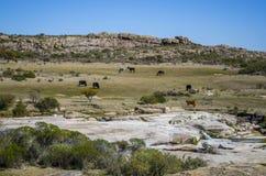 Animals on the mountain pastures Royalty Free Stock Photo