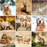 Animals in nature Royalty Free Stock Photo