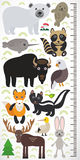Animals of North America - narwhal polar bear fur seal raccoon skunk fox eagle bison elk gannet hare. Children height meter wall s Royalty Free Stock Image