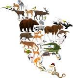 Animals North America - vector illustration Stock Images