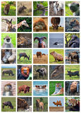 Animals od the world Stock Photography
