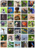 Animals od the world stock photo