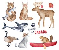 Free `Animals Of Canada` Watercolor Illustration Set. Royalty Free Stock Images - 145707439