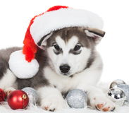 Animals. One puppy Husky white , Christmas hat. Wonderful dog puppy Husky, has red Christmas hat. New Year holiday card. Little Santa Claus. Winter snow Stock Photos