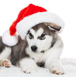 Animals. One puppy Husky white , Christmas hat. Wonderful dog puppy Husky, has red Christmas hat. New Year holiday card. Little Santa Claus. Winter snow Stock Photo