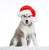 Animals. One puppy Husky white , Christmas hat. Wonderful dog puppy Husky, has red Christmas hat. New Year holiday card. Little Santa Claus. Winter snow Stock Image