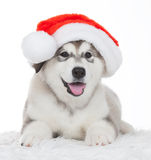 Animals. One puppy Husky white isolated, Christmas hat!. Wonderful one happy puppy Husky, has red Christmas hat. New Year holiday card. Little Santa Claus Royalty Free Stock Images