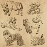 Animals pack 10 Royalty Free Stock Image