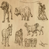 Animals pack 9 Stock Images