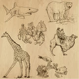 Animals pack 16. Animals around the World (set no. 16) - Collection of an hand drawn illustrations. Description: Each drawing comprise of two layer of outlines Royalty Free Stock Photos
