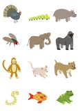 Animals Pack 4. Available editable .eps file Royalty Free Stock Image